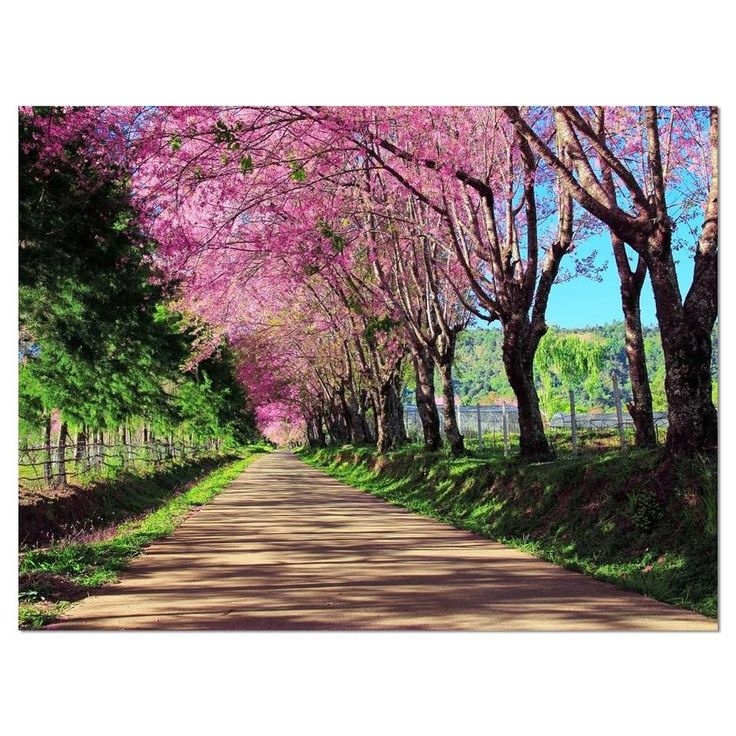 Designart Cherry Blossom Pathway In Chiang Mai Landscape Canvas Art Print Lowes Com In 2020 Landscape Canvas Art Landscape Canvas Landscape