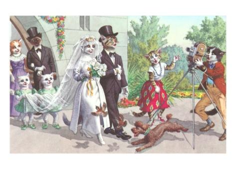 22 best wedding images on pinterest cat wedding cute kittens cat wedding premium poster at art junglespirit Images