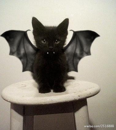 Vampire cat !!! This is for Aubrey  :)