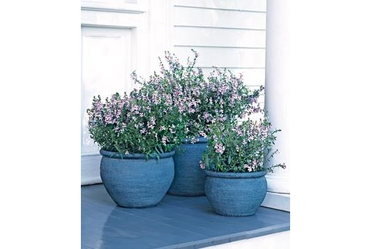 Plants in blue pots - Home and Garden Design Idea's