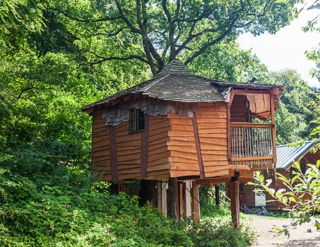 The Golden Oak Treehouse at Deerpark #Cornwall Overlooking the millpond and positively magical!  Self Catered Accommodation in Deerpark, Cornwall - Forest Holidays #ForestRetreat #UKgetaway #summer