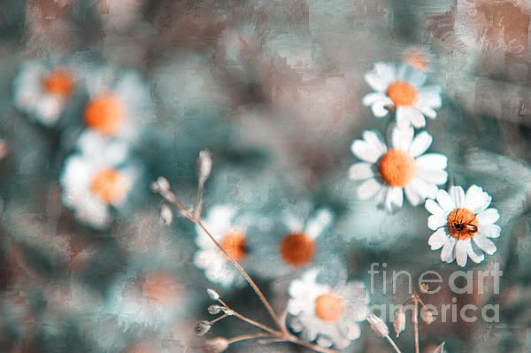 Joyful Friends. Nature In Alien Skin by Jenny Rainbow. #Daisy #Flower #Floral #Blue #White #FineArtPrints #FloralDesign #Elegance #ElegantInterior #InteriorDesign #WallArt #JennyRainbowFineArtPhotography #Silver #BestGift #Prosperity #Joy #Happiness #Romantic