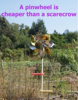 17 Best Images About Keep The Nasty Birds Off My Porch On Pinterest Cats Stainless Steel And