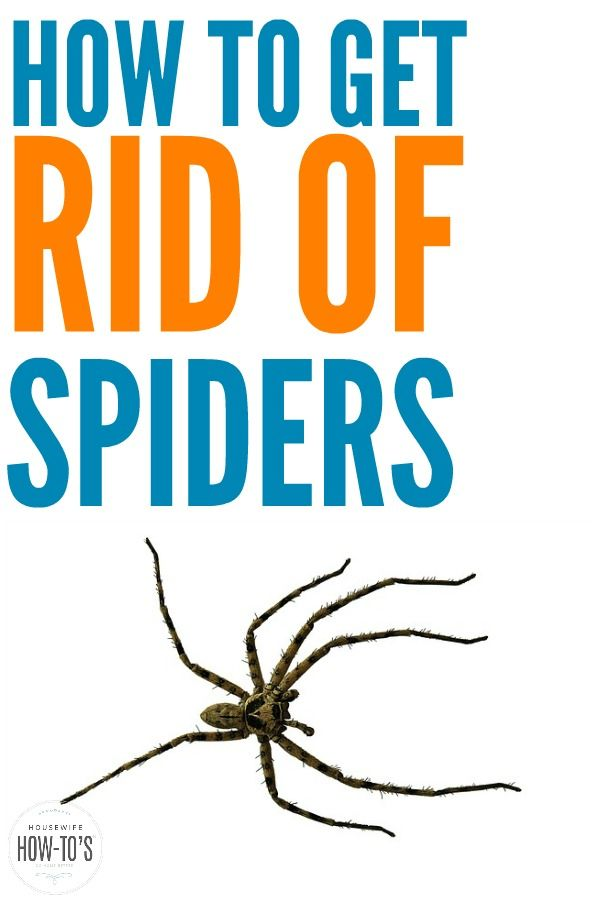 74ab0fea30e39690ea024df8c446840f - How To Get Rid Of Spiders From Your Car