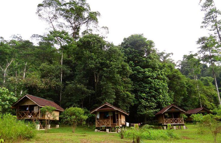 Green Life camp - Sumatra - Indonesia - on the boarder of Gunung Leuser National Park. Great volunteer program!