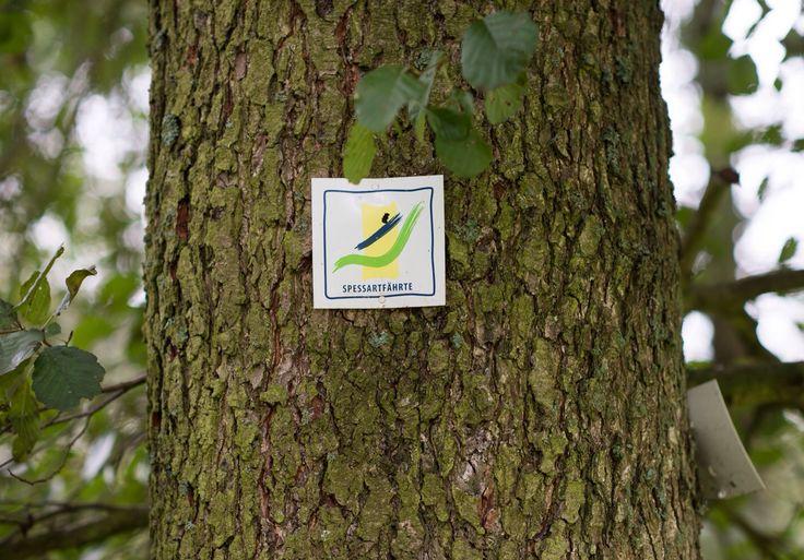 Die sechs Spessartfährten sind Rundwege und Tageswanderungen, die die Vielfältigkeit des Spessarts in Hessen zeigen. Ihr könnt an vielen Stellen zu einer Wanderung auf den Routen einsteigen.