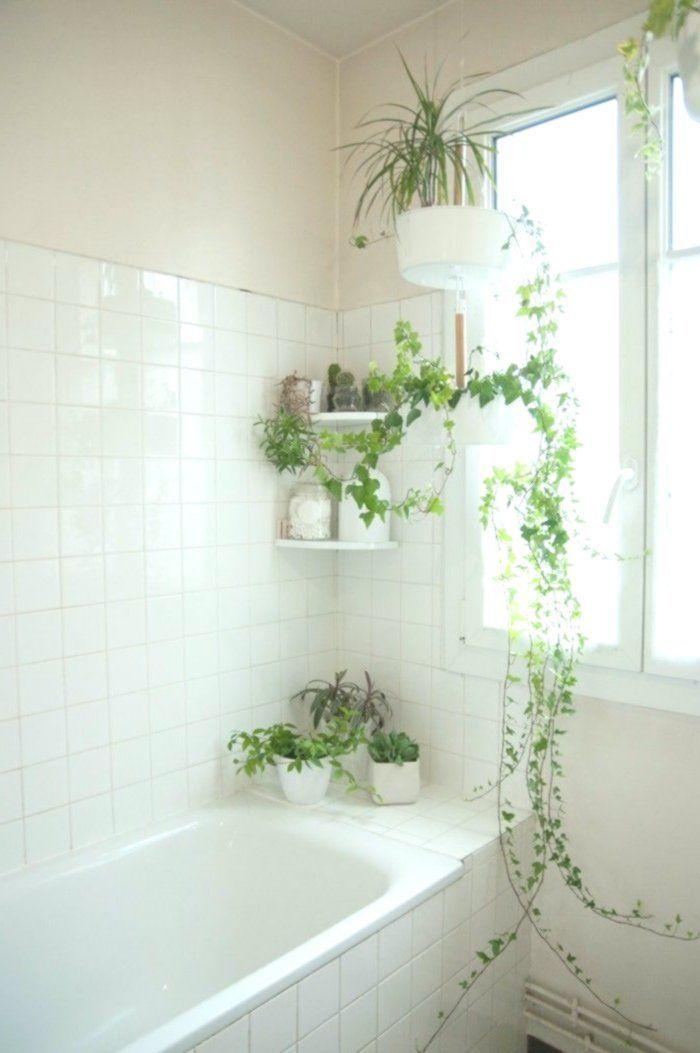 Grune Pflanzen Bad Mode Efeu Badezimmer Feu Design Grun