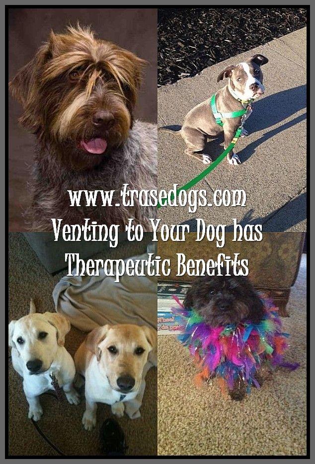 Talking About Dog Dogs Best Dog Shampoo Dog Shampoo