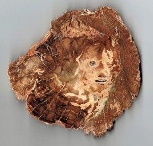 Herfst. Het leven vestild. De hele maand oktober geeft de Steenarend 20 % korting op al het versteend hout.