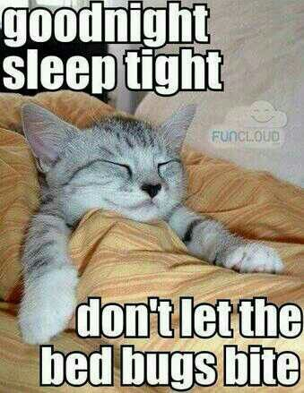 Image result for good night everybody