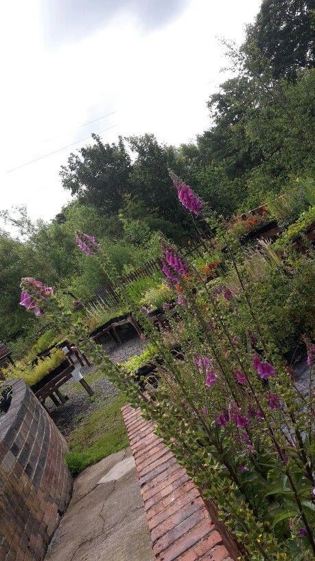 Lionmouth Rural Centre Plant Nursery  ....Esh Winning  ...♡♡♡