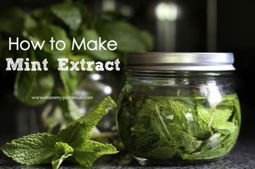 How To Make Mint Extract...http://homestead-and-survival.com/how-to-make-mint-extract/
