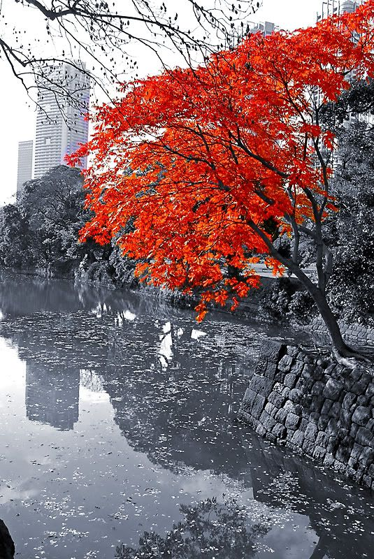Color Splash landscapes | Color Splash, Photography, Landscape, Landscapes, Colour Splash ...