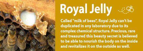 Fresh Royal Jelly.