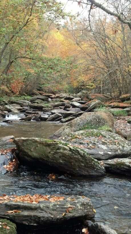 174 best images about north carolina on pinterest for Best trout fishing in nc