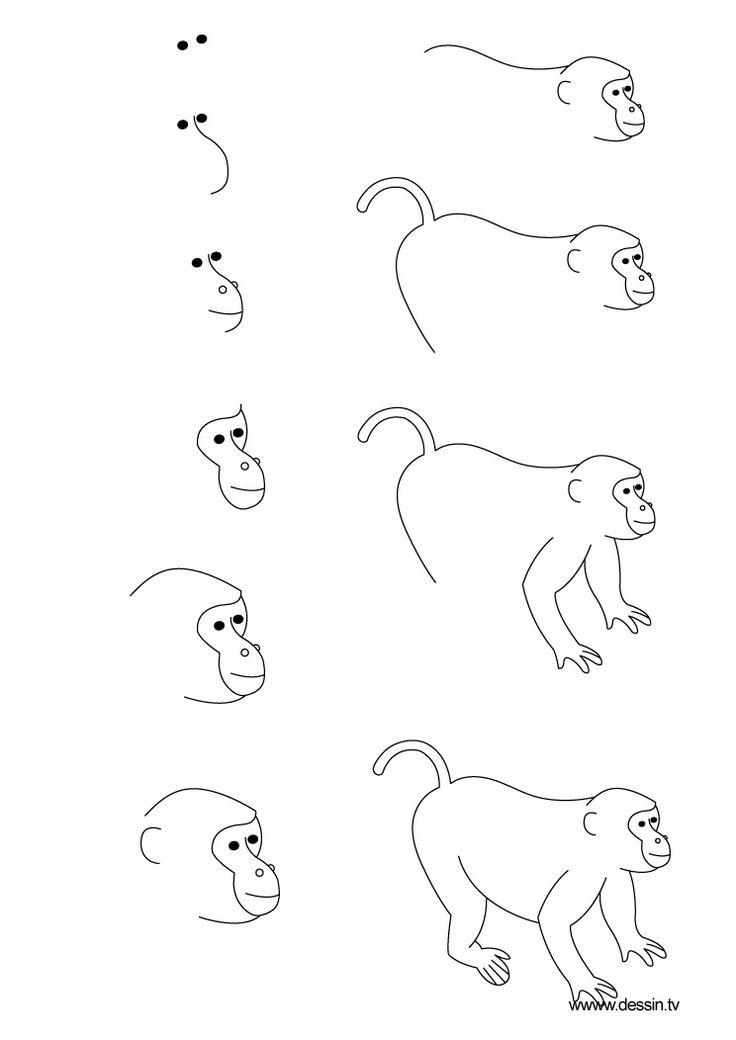 dessin singe