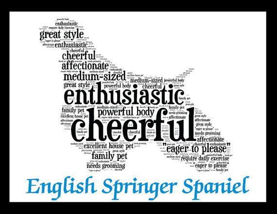 English Springer Spaniel Art Illustration