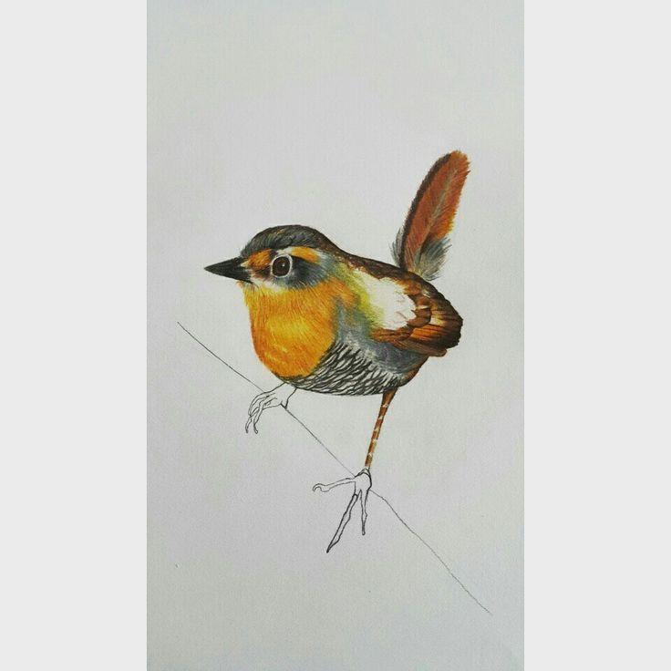 "Chucao Chilote. Serie ""aves de Chile"". Artista coté Correa"