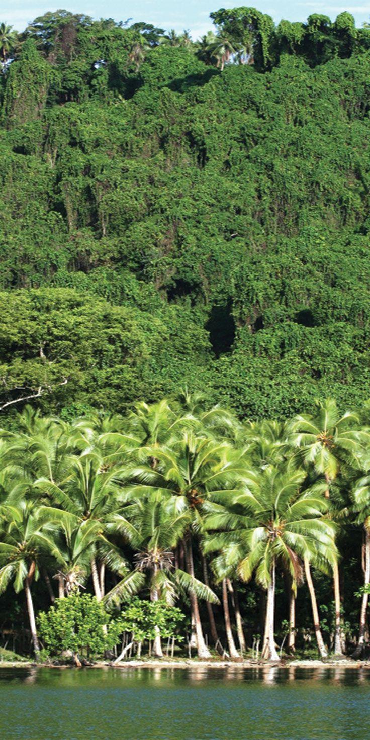 Where the lush jungle meets the water on Malekula Island, Vanuatu.