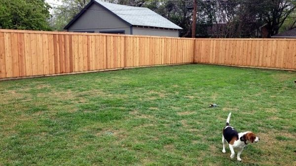 Fantastic Cheap Privacy Fencing Our Adventure Building A Western Red Cedar Privacy Fence In Dallas