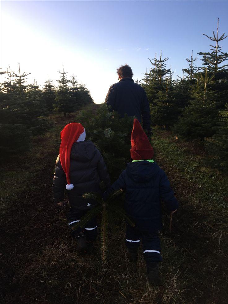 Med Morfar i skoven og hente juletræ.