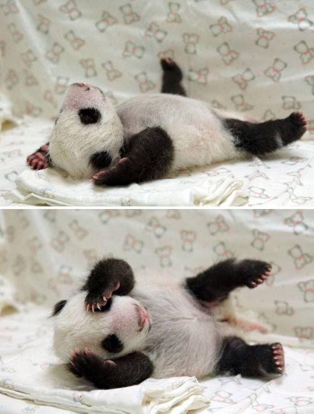 Panda cub yoga meditate