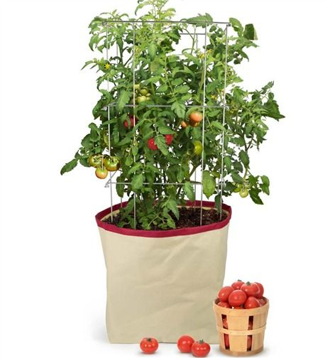 Looking To Start Your Own Home Garden? Try The Homegrown Gourmet Grow  Bag/Tomoato Planter.