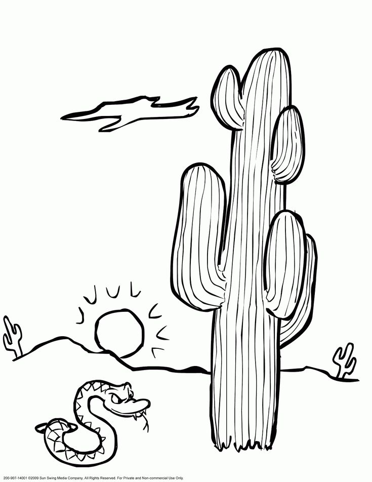 Desert Plants Coloring Pages Free Online Printable Sheets For Kids Get The Latest Images