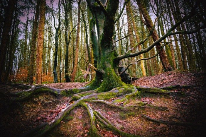 Free images for your websites. The top 30 sites including free video to use for your content! #free #video #woods #images #stock #photo #marketing #websites #HD