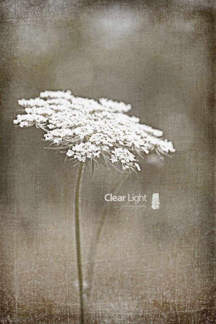 Wildflower ..
