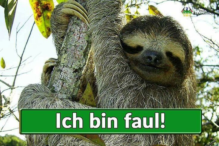 faul = preguiçoso Ich bin faul = Eu sou preguiçoso / Eu estou com preguiça das Faultier = o bicho-preguiça Ein fauler Mann = Um homem preguiçoso faul pode significar também podre/estragado: faules Obst = fruta estragada/podre fauler Sack => ao pé da letra = saco preguiçoso: é uma expressão usada no alemão para chamar alguém de preguiçoso Du fauler Sack! = Seu preguiçoso Se diz também: fauler Hund = cachorro preguiçoso (ao pé da letra)