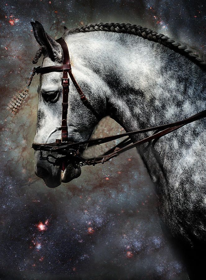 The Horse Among The Stars by Jenny Rainbow fine art print for home decor. Andalusian horses are one of the greatest ancient breeds. They originated in the Iberian Peninsula in the region of Andalusia. Though Andalusian horses were well spread in other regions as well, the breed was named after this very province.  To buy print please click on image. Order online, delivery, 30 days money back guaranty. #JennyRainbowFineArtPhotography #HomeDecor #Horse