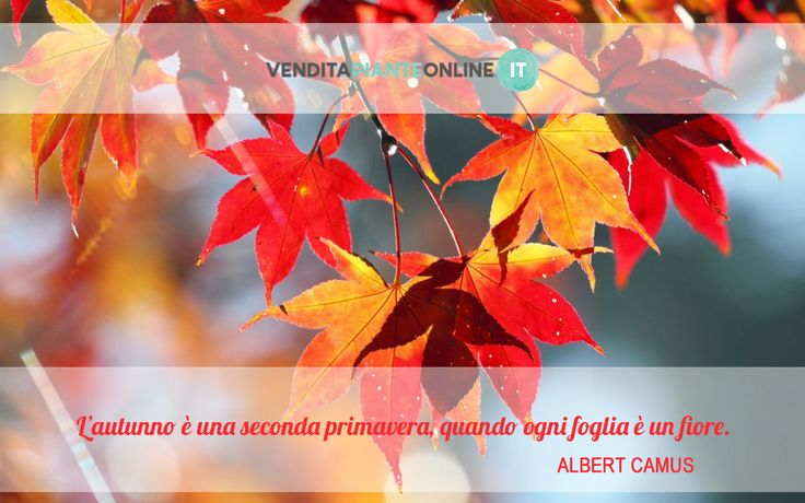 www.venditapianteonline.it #venditapianteonline #fall #november #foglie #aforismi #autunno #quote