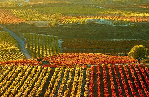 27.) Visit a vineyard as well as try canolis and pasta in Italy!