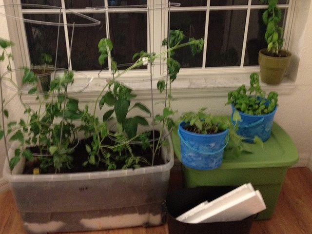 39 best images about indoor vegetable garden on pinterest for Growing vegetables indoors