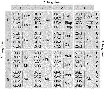Den genetiske kode