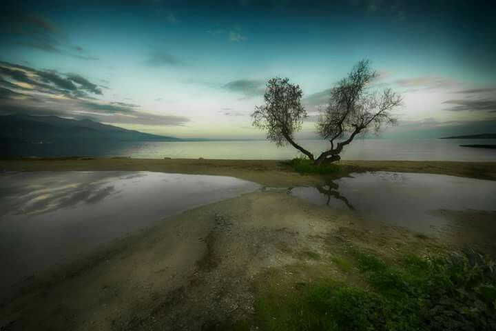 Tree near the sea