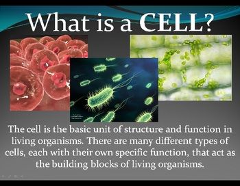 historical development of the cell theory Components of cells | the origins of multicellularity | microscopes | learning   the theory currently with the most acceptance is the big bang theory, the idea.