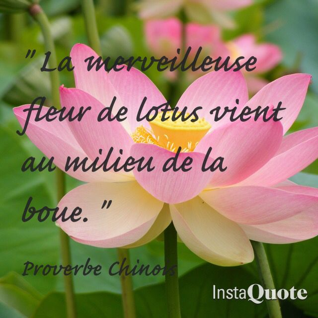 Proverbe chinois.