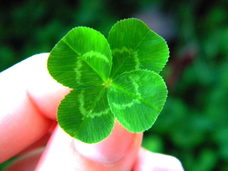 12 best 4 leaf clover images on Pinterest Clovers Good luck and