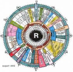 How to Use an Iridology Eye Chart!