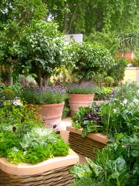 potager garden with willow-weave raised beds | fruit trees planted in terracotta pots, underplanted with lavender