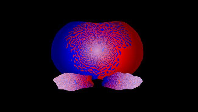 Brain development - Critical Periods