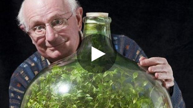 Coupée du monde depuis 53 ans, une plante est parvenue à grandir dans une bouteille hermétiquement fermée en créant...
