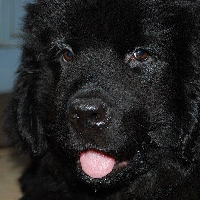 Dog Breed That Looks Like A Rug: Www.PetWellbeing.org