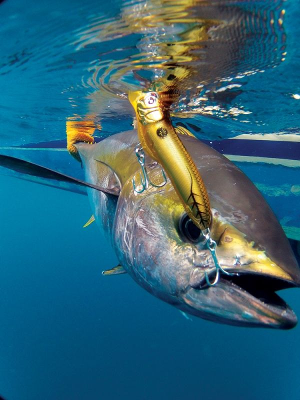 An angler can launch a popper to yellowfin around the dolphin and get an instant hookup. This sort of run-and-gun fishing is seldom boring.