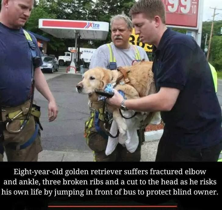 Dog loyalty is beyond comprehension. Poor baby. I'm sure he got what he needs to heal.
