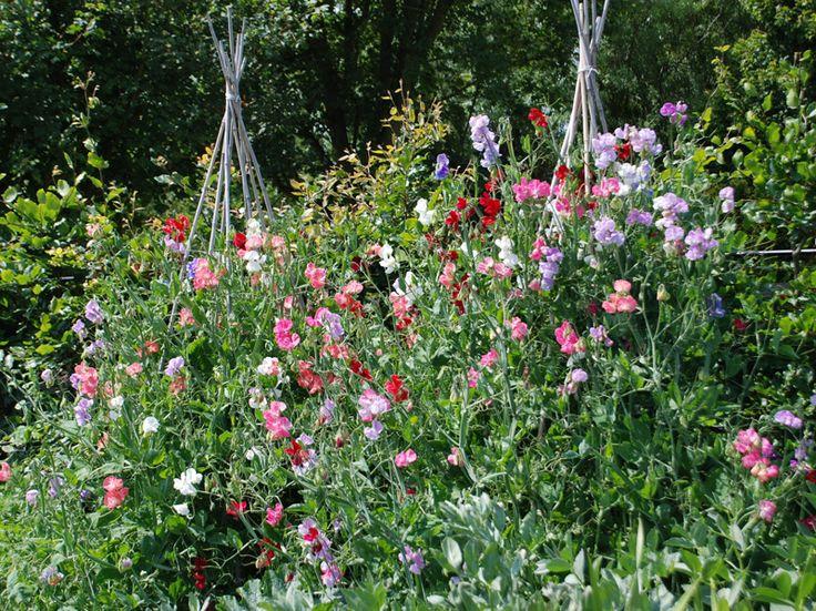 172 best A ~ Cut Flower Garden images on Pinterest Apartment