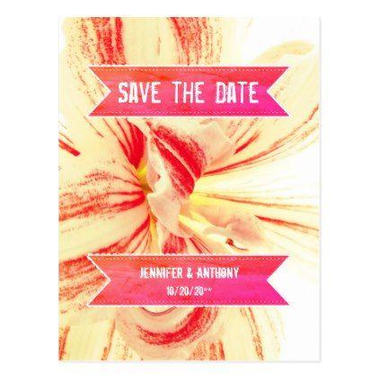 Striped Amaryllis Flower Wedding Save the Date Postcard - postcard post card postcards unique diy cyo customize personalize
