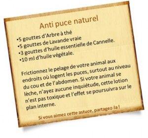 anti puce naturel huiles essentielles